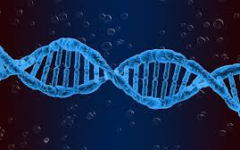 The Relevance of Twins on the Nature vs. Nurture Debate